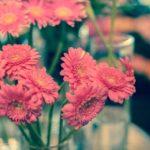 【花の仕事】店売りの花屋さんの1週間はどんな感じ?