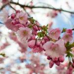 春の処方箋。