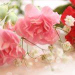 もうすぐ母の日!花キューピットの花はどう届く?【お花屋さん店員のしごと】
