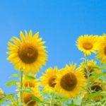 夏は切り花がもたない?7~8月に花屋で買える『暑さに強い切花』をまとめました。