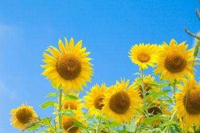 夏は切り花がもたない78月に花屋で買える暑さに強い切花をまとめ
