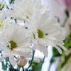 花屋のブランディングと、花を贈る心のジレンマ。