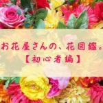 花の名前、わかりますか?お花屋さんでよく見る花9選【スタメン級・初心者編】