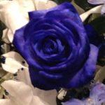 青いバラは存在する?花屋が考える青いバラの魅力。