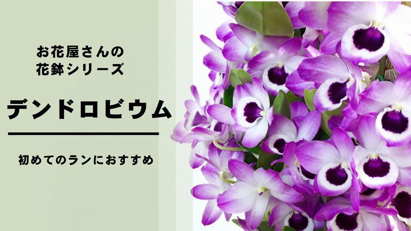 方 デンドロビウム 育て 蘭の育て方【デンドロビウム】基本的な育て方と花を咲かせるコツ│プラントリアンヌ