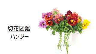 パンジー 切花